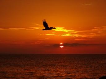 Nice timing Pelicano - La Boca