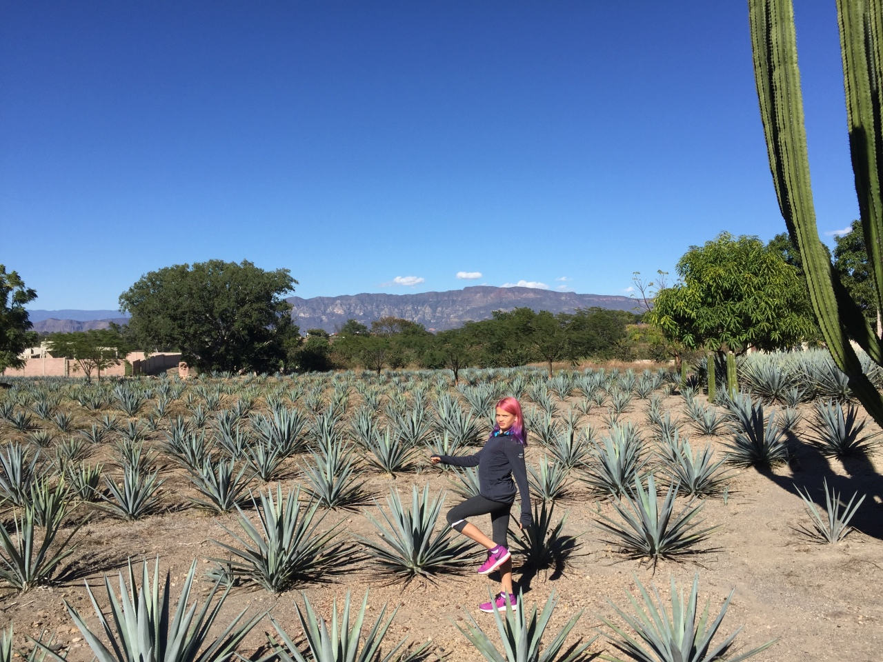 Tequila Amalia in Agave